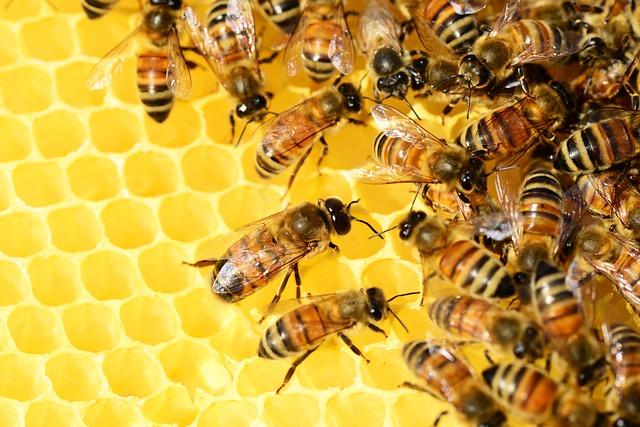 Coraz większe zainteresowanie olimpiadą pszczelarską