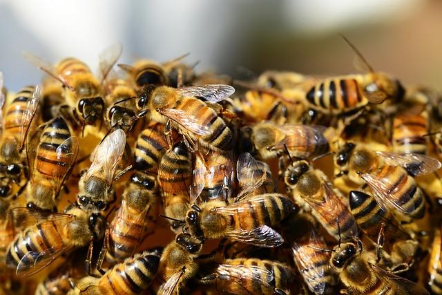 To wyjątkowa szkoła! Misją szkoły podstawowej w Szczańcu jest propagowanie pszczelarstwa